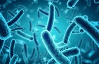 موقع-علمي:-البكتيريا-في-الفضاء-تصبح-أكثر-مقاومة-وقاتلة