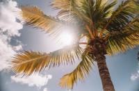 الشمس-تقلل-الوفاة-بكورونا..-وتعليمات-جديدة-حول-انتقال-الوباء