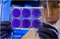 -علماء-يكشفون-لأول-مرة-عن-كائنات-تلتهم-الفيروسات